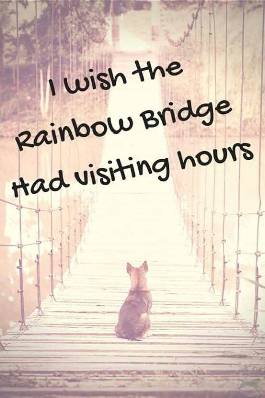 I wish...visit hrs